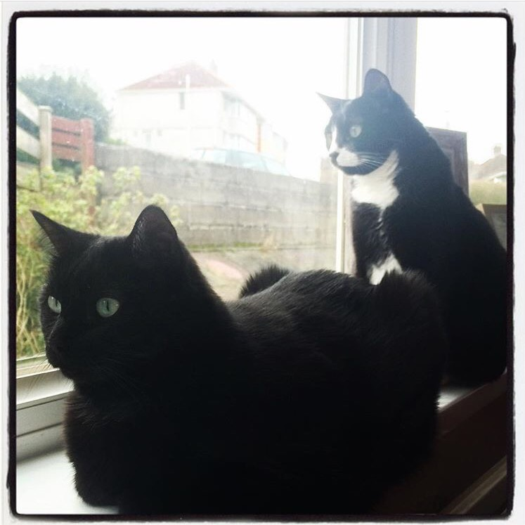 bea-and-figaro-cats