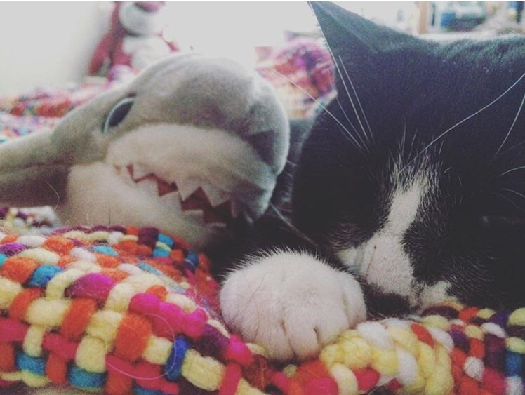black-and-white-cat-sleeping