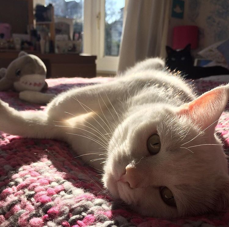 white-cat-in-the-sunshine
