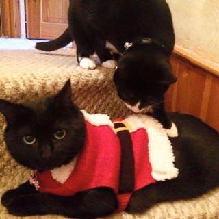 bea-and-figaro-at-christmas