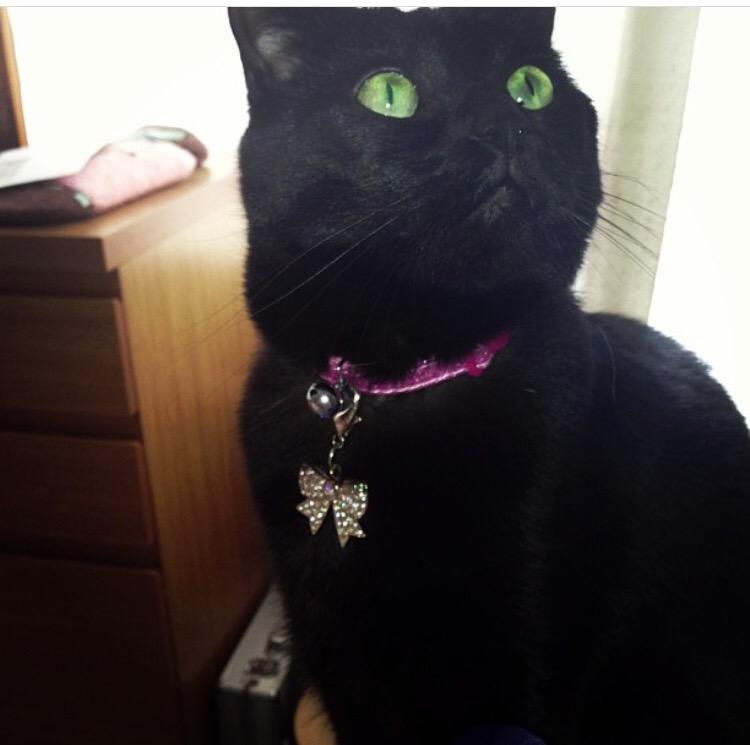 be a-black-cat
