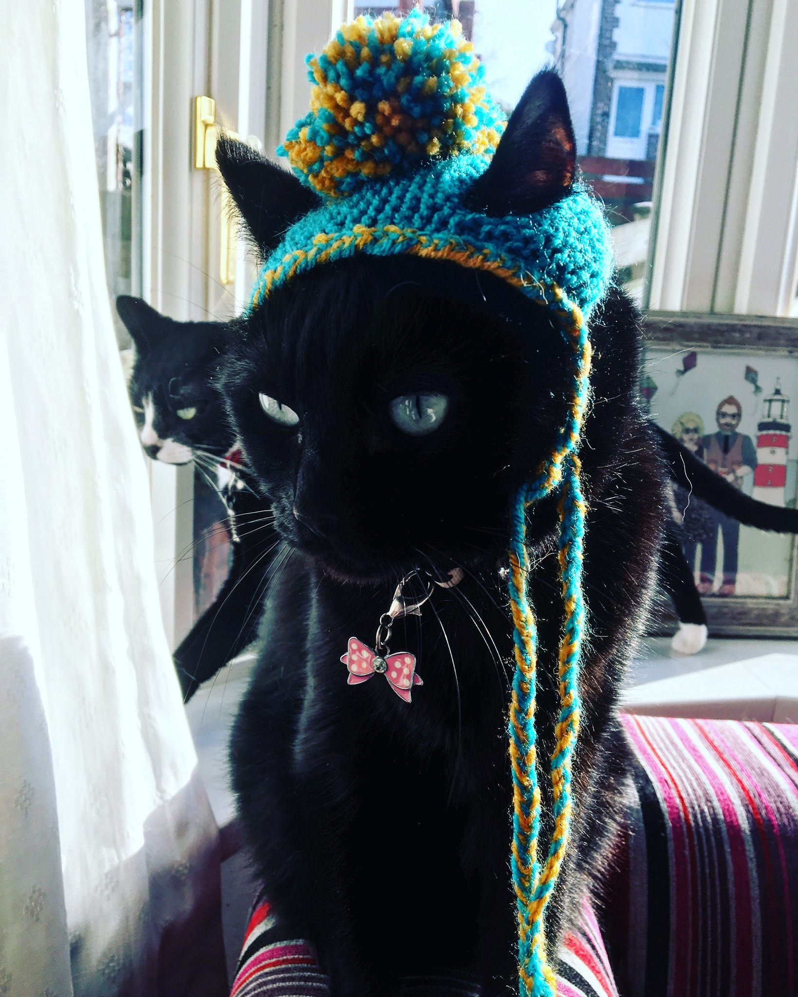 Bobble Hats for Cats
