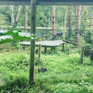 monkey-world-enclosure