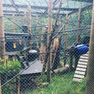 monkey-world-enclosure