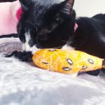 cat with catnip toy from Mypurrfectgiftbox